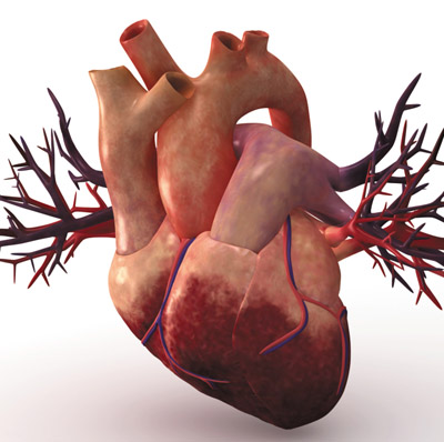 New velcro-like scaffold for growing heart tissue
