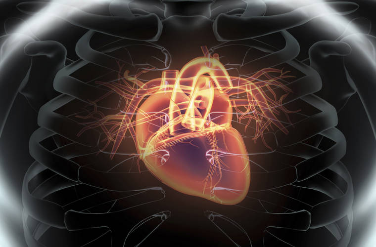 Electric mesh can give the heart an electromechanical hug
