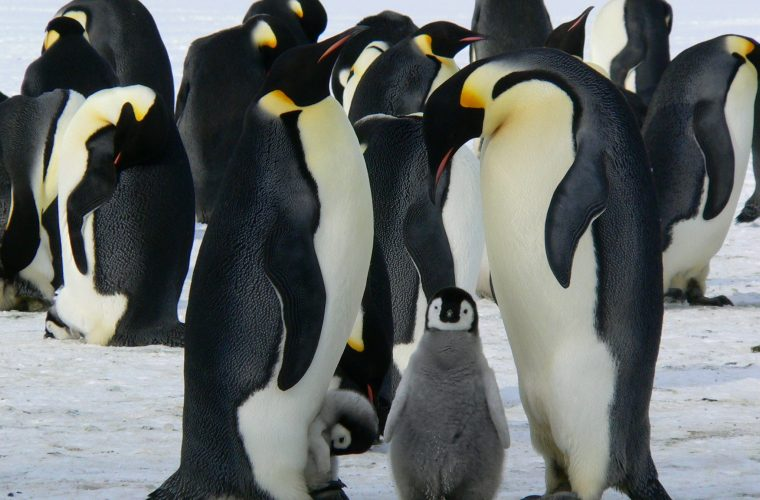 World Penguin Day 2017: How Engineering combined with 'people power'