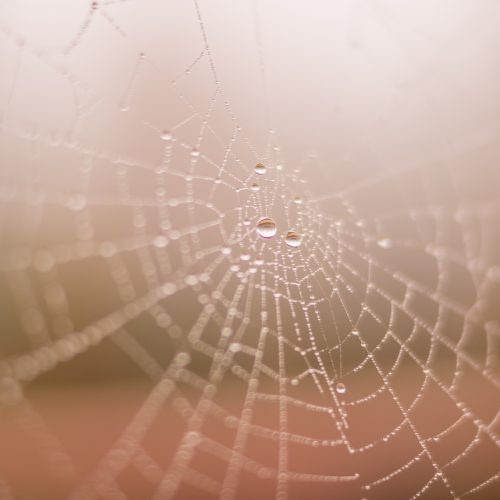 Artificial Spider Silk: Stronger Than Steel and 98 Percent Water