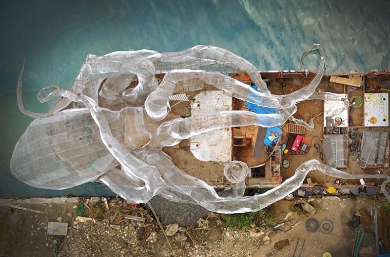 A Giant octopus and historic ship come together to create new coral ecosystem