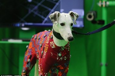 engineering careers  Motion Capture suit for dogs will make CGI realistic