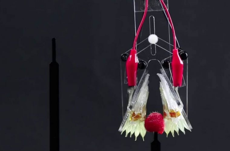 """Inexpensive Soft Robot """"Muscle"""" Can Lift 200 Times Its Own Weight"""