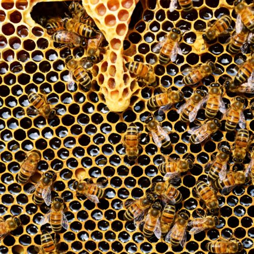 Honeycomb structures might be the key supercharging batteries