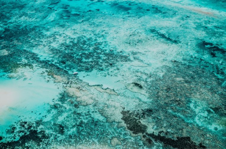 Could we regrow the Great Barrier Reef with electricity?