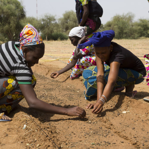 These 20 African countries are on a mission to create the Great Green Wall of Africa