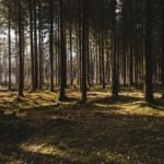 Scotland plants 22 million trees in response to the global climate emergency