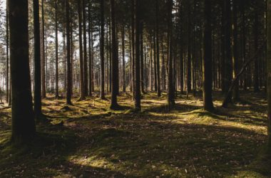 engineering careers  Scotland plants 22 million trees in response to the global climate emergency