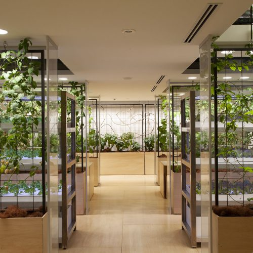 Tokyo office brings new meaning to 'healthy office environment' - grows own food in vertical farm