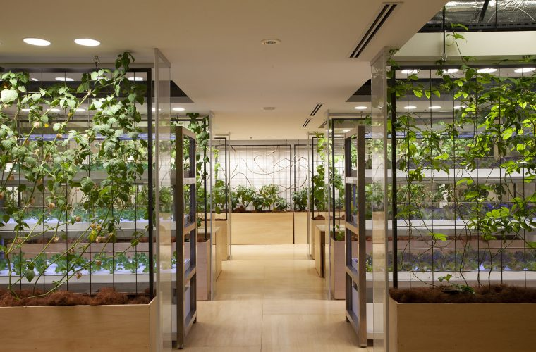 Tokyo office brings new meaning to 'healthy office environment' – grows own food in vertical farm