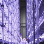 Meet the vertical farm in Denmark aiming to grow 1,000 tons of greens a year